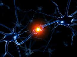 εγκέφακος-νέες-συνάψεις